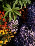Garden plants and flowers. Mix of garden plants and flowers floral background Royalty Free Stock Photo