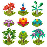 Garden Plants with Flowers for Game Stock Photos