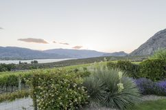 Garden plants,grape vines, Lake Osoyoos and distant hils at suns royalty free stock photos