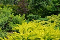 Garden plants Royalty Free Stock Photo
