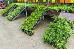 Garden plants in greenhouse stock image