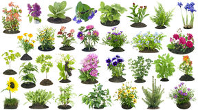 Garden plants grow in soil set Royalty Free Stock Image