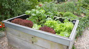 Garden plants growing in wooden box Royalty Free Stock Image