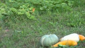 Garden plants and harvested fresh vegetables in grass. Tilt down. 4K stock footage