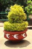 Garden plants in the pot Stock Image