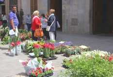 Garden plants for sale at the market in Inca, Mallorca, Spain. Flowers and garden plants for sale at the weekly outdoor market in Inca at the isle of Mallorca stock image