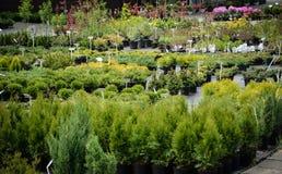 Garden plants. School garden plants  - small garden plants Stock Images