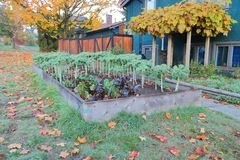 Garden Plot on Municipal Boulevard. An owner has used municipal land, in this case the neighborhood boulevard, to grow vegetables Royalty Free Stock Photo