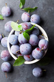 Garden plums Stock Image