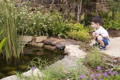 Garden Pond Stock Photos