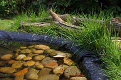 Garden Pond. A garden pond in Spring with tadpoles visible against the pebbles Stock Photos