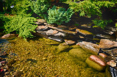 Garden pond. Scenic view of garden pond with lush green vegetation Stock Photography