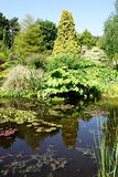 Garden Pond Royalty Free Stock Image