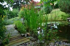 Garden pond goldfish Stock Photography