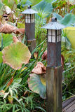 Garden Pond Lights and Lotus Leaves Royalty Free Stock Photos