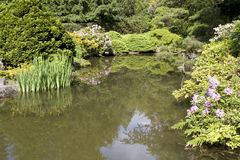 Garden pond. Nice pond with beautiful plants around at Kubota Garden Seattle Royalty Free Stock Image