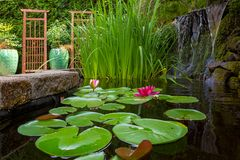 Garden Pond with Plants and Waterfall in backyard stock images