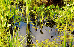 Garden Pond royalty free stock photos