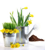 Garden pot with grass, daisies and watering can Stock Photo