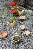 Garden Pots. On a stone garden Royalty Free Stock Photos