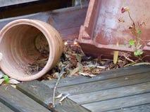 garden pots Stock Photography