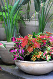 Garden Pots With Coleus Plants Royalty Free Stock Images
