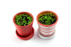 Garden pots plant. Two colored flower pots  isolated over white Stock Photo