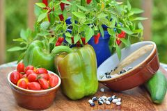 Garden produce, mixed vegetables. including huge sweet peppers and tiny tomatoes. Mixed home grown vegetables , chilli pepper plant sweet peppers, tomatoes, yin stock images