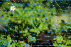 Garden protection net Royalty Free Stock Photography