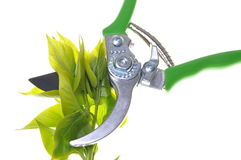 Garden pruner with green twigs Royalty Free Stock Photos