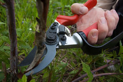 Garden pruner in hand Stock Photos