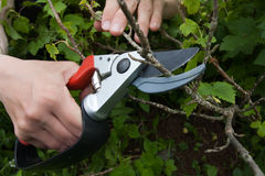 Garden pruner Royalty Free Stock Photos