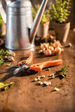 Garden pruner on wooden table Royalty Free Stock Photo