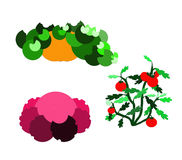 Garden. A pumpkin, a cabbage and a tomato plant Royalty Free Illustration
