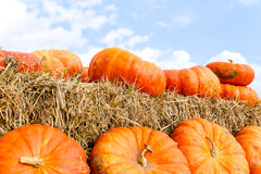 Garden pumpkins on straw Royalty Free Stock Images