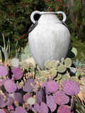 Garden: purple cactus with urn. Purple prickly pear cactus Opuntia violaceae with urn in desert garden, California Stock Images