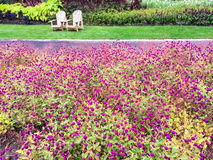 Garden with purple flowers and wooden chairs Royalty Free Stock Photo