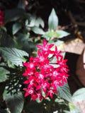 The Garden Queen royalty free stock photos