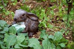 Garden rabbit with lettuce Stock Photography