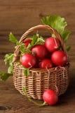 Garden radish. Stock Photography