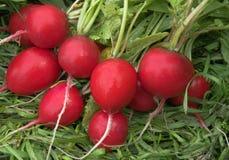 Garden radish. Red garden radish on a white background Stock Photography