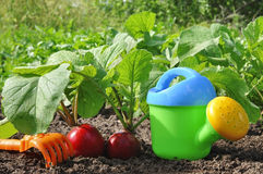 Garden Radish And Watering Can Stock Photo