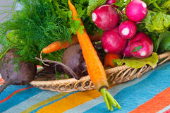 Garden radish, carrots and beet. Royalty Free Stock Photo