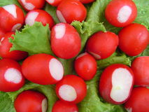 Garden radish on the fresh sheet salad. The garden radish lays on leaves of fresh sheet salad Stock Image