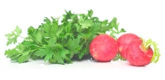 Garden radish and parsley. On the white. Close-up, shallow DOF Stock Image