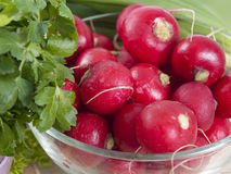 Garden radish in a plate. Heap of a fresh and juicy radish on a plate Royalty Free Stock Photos
