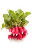 Garden Radish. Small garden radish isolated on white background Stock Photo