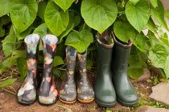 Garden Rainy Rubber Shoes In Garden. Garden Rainy Rubber Shoes. Rubber Boots Male, Children, Female On Earth Near Green Leaves Plant In Garden Royalty Free Stock Images