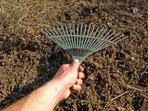 Garden rake in action Royalty Free Stock Photo