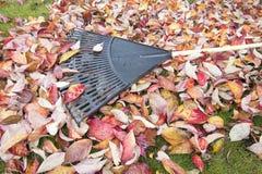 Garden Rake on Fallen Leaves Stock Photography